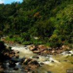 Кусочек реликтового леса